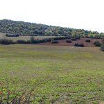 Montredon-CD-31-11-17-14