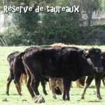 Quissac-CD-12-03-19-16