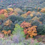 Bois-de-Monier-CD-26-11-19-2