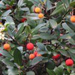 Bois-de-Monier-CD-26-11-19-4