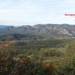 Bois-de-Monier-CD-26-11-19-11